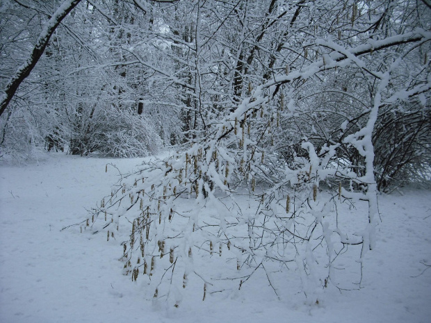 20.03.09r.park Strzelecki-Tarnów. #zima