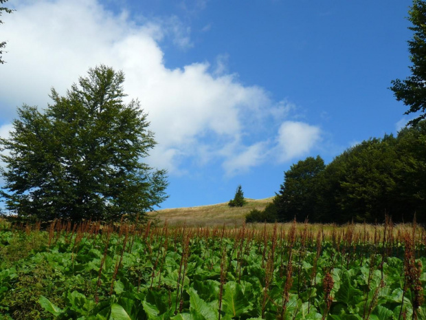 #góry #krajobraz #natura #bieszczady #wakacje #lato #chmura #widoki