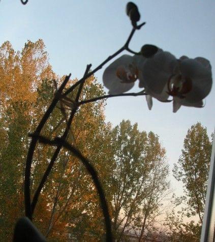 Uprawa wazonowa w keramzycie - Page 2 E3316326a96b78e0