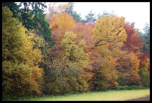 #jesień #droga #las #liście #kolory #drzewa