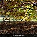 Barwy jesieni #jesień #krajobraz #pejzaż #pulpit #tapety #wallpapers
