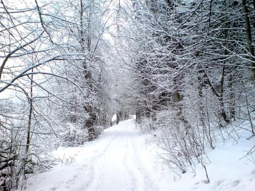 zima #biały #śnieg #szron #zima #las #droga