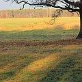 słońcem malowane #dąb #drzewo #jesień