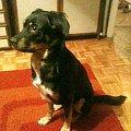 pies szuka domu #pies #PiesSzukaDomu #psiak