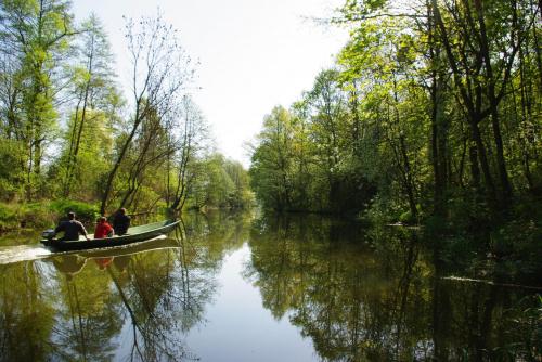#rzeka #Noteć #las