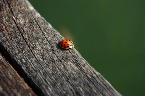 #biedronka #owady #wiosna