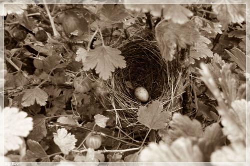#gniazdo #ptaki