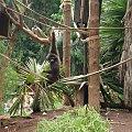 Gibon #JunglePark #roślinki #egzotyczne #palmy #Teneryfa #zwierzątka