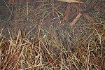 images46.fotosik.pl/1369/cc2fbf76ac1c25c4m.jpg