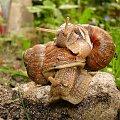 #ślimaki #zwierzaki #love