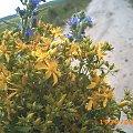 #bukiet #makro #kwiaty