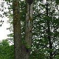 Ekologiczne oświetlenie #drzewo #latarnia #ekologia #oswietlenie