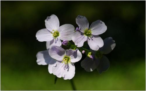 Jakieś kwiatki #Makro #kwiaty