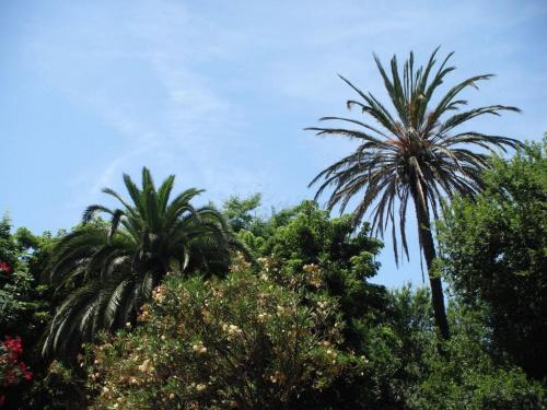 Roślinki na wyspie
