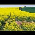 żółte i zielone #rzepak #pole #droga #Kłodzko #StaryWielisław