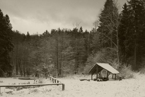 #las #drzewa #rośliny #przyroda #natura #zima #pochmurno #polana