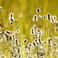 trochę słońca #flora #łąka #słonce #światło