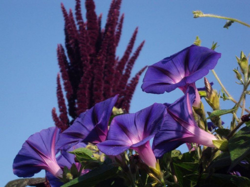 #kwiat #niebo #kolor #natura