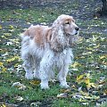 XI 2003 w parku #Dudi #Dudinka #pies #psica