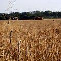 zbliża się zagłada ;D #rolnictwo #wieś #żniwa