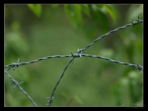 Drut kolczasty [Olympus E-410, Zuiko Digital 14-42 + soczewka makro +8Dioptrii] #DrutKolczasty #makro #ogrodzenie #płot