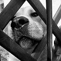 a ku ku ;D #pies #zwierze