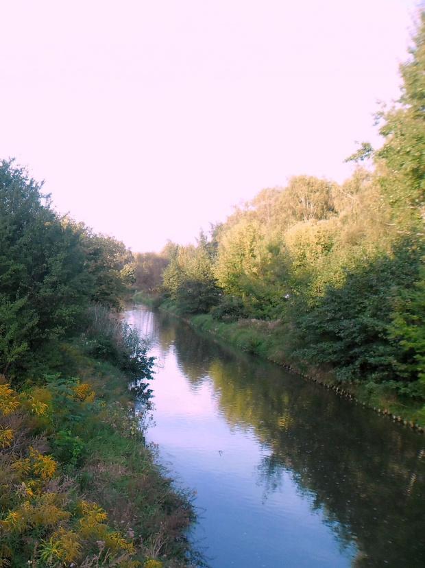 natura #natura #przyroda #rośliny #drzewa #rzeka #lasy