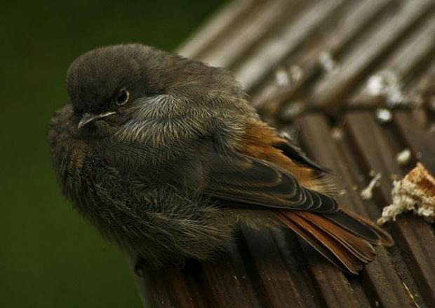 Wszyscy maja ptaszki, mam i ja...:) #ptak