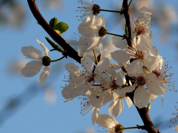 Wesolych Swiąt #wisnie #swięta #zyczenia #kwiaty