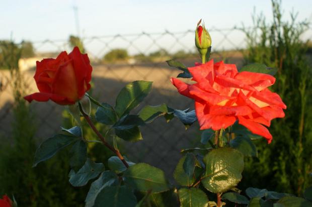 #zachód #słońca #kwaiaty #róże