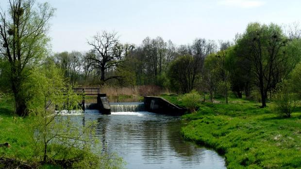 nad rzeką #natura #rzeka #PogodnyDzien #wiosna