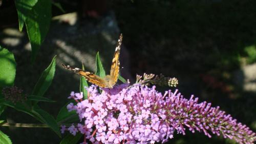 Motylek.