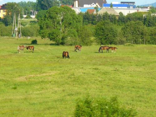 #natura #konie #przyroda