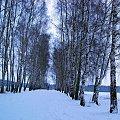 Biało wszędzie. #zima #śnieg #las #biel