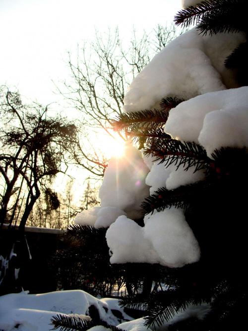 zimowa sesyjka . ;P