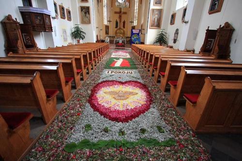 Dywan kwiatowy ułożony na oktawę Bożego Ciała #kwiaty #BożeCiało #oktawa #Przasnysz #Pasjoni