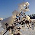 #zima #zimno #biały #biało #niebo #śnieg #lód #mróz