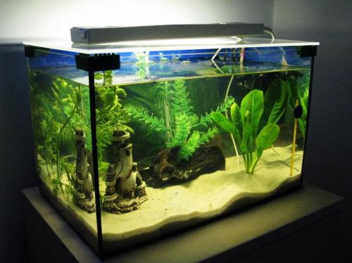 Ciekawe Oświetlenie Akwarium Akwarystyka Forum