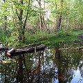 Puszcza Kampinoska-na horyzoncie pewny grunt #PuszczaKampinoska #błoto #UroczyskoKalisko