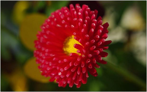 Dziurki i rurki... #DziurkiIRurki #kwiaty #makro