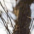 #drzewo #ścieżka #sieć #gałęzie