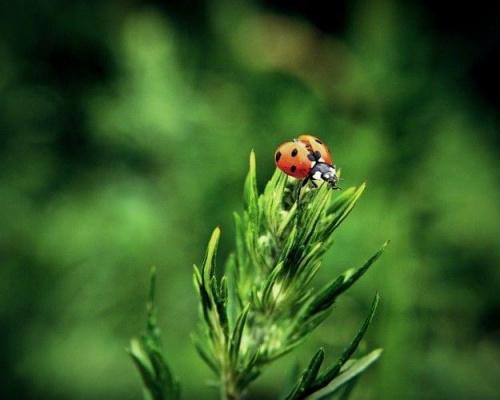 #biedronka #zieleń #makro #przyroda #natura