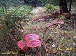 images46.fotosik.pl/326/a44b8640966c9637m.jpg