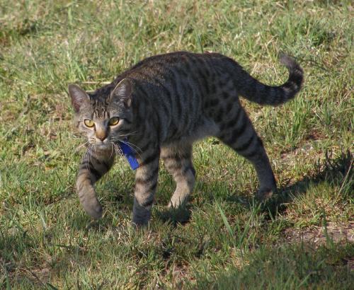 I kolejny kot... #kot #skradanie