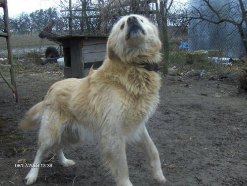 rysiu pysiu #zwierzęta #pies #dog