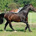 #Arkadia #Boy #KAma #ślązaki #WielkaLipa #PAlant #konie #stadnina