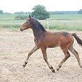 #Arkadia #Boy #klacz #konie #Probus #stadnina #ślązaki #Truskawka #Tuzera #WielkaLipa