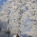 mój tata i siarzecka :) #zima #szron #drzewa