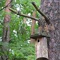 POLESIE - Sobiborski Park Krajobrazowy #Polesie #SobiborskiParkKrajobrazowy