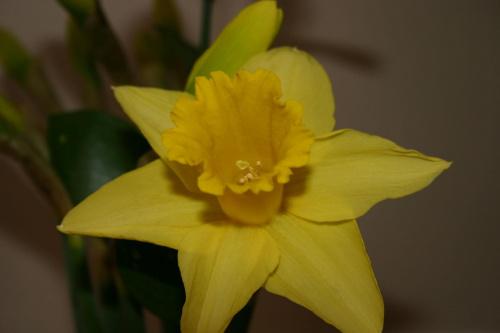 #kwiaty #kolary